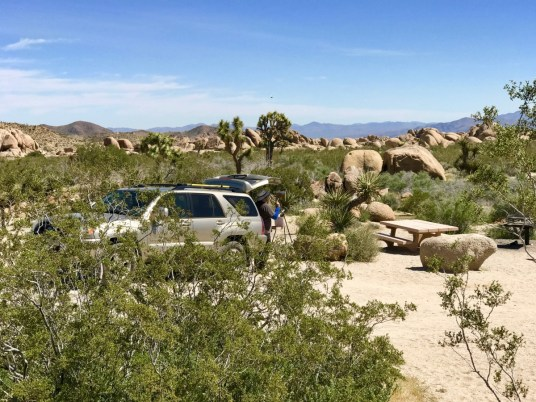 IMG 2544 - Best Hikes in Joshua Tree National Park on a One-Day Trip