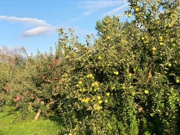 apple orchard - 3 Awe-Inspiring Niagara Falls USA Attractions