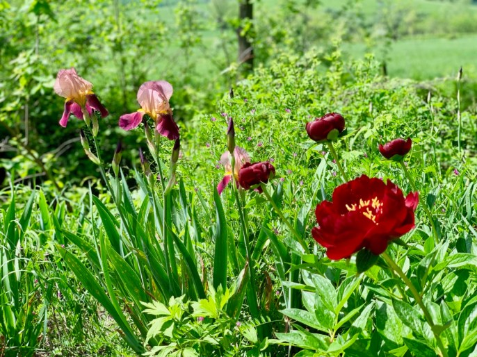 Polyface Farm Flowers