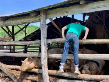Polyface Farm Lauryn Pigs - Fun Things to Do in Staunton Virginia