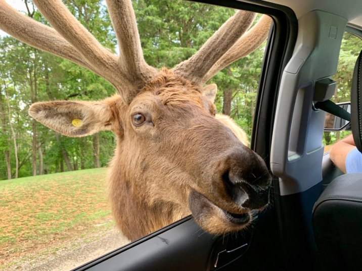 Virginia Safari Park Elk - Scenic & Historic Things to Do in Lexington, Virginia