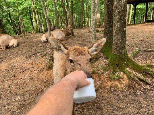 Virginia Safari Park Feeding Deer