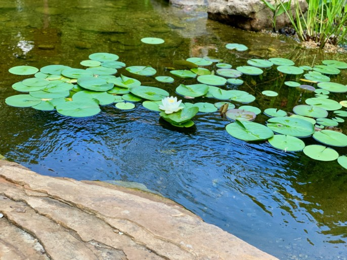 Lily Pond - 18+ Outstanding Athens Georgia Attractions