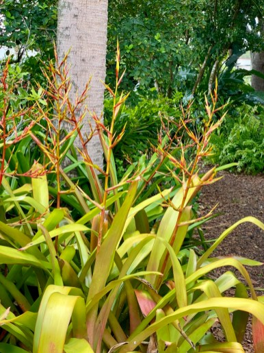 tall yellow bromeliads - Discover Lake County Florida Outdoor Adventures
