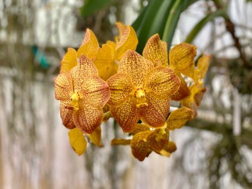 yellow orchid - Discover Lake County Florida Outdoor Adventures