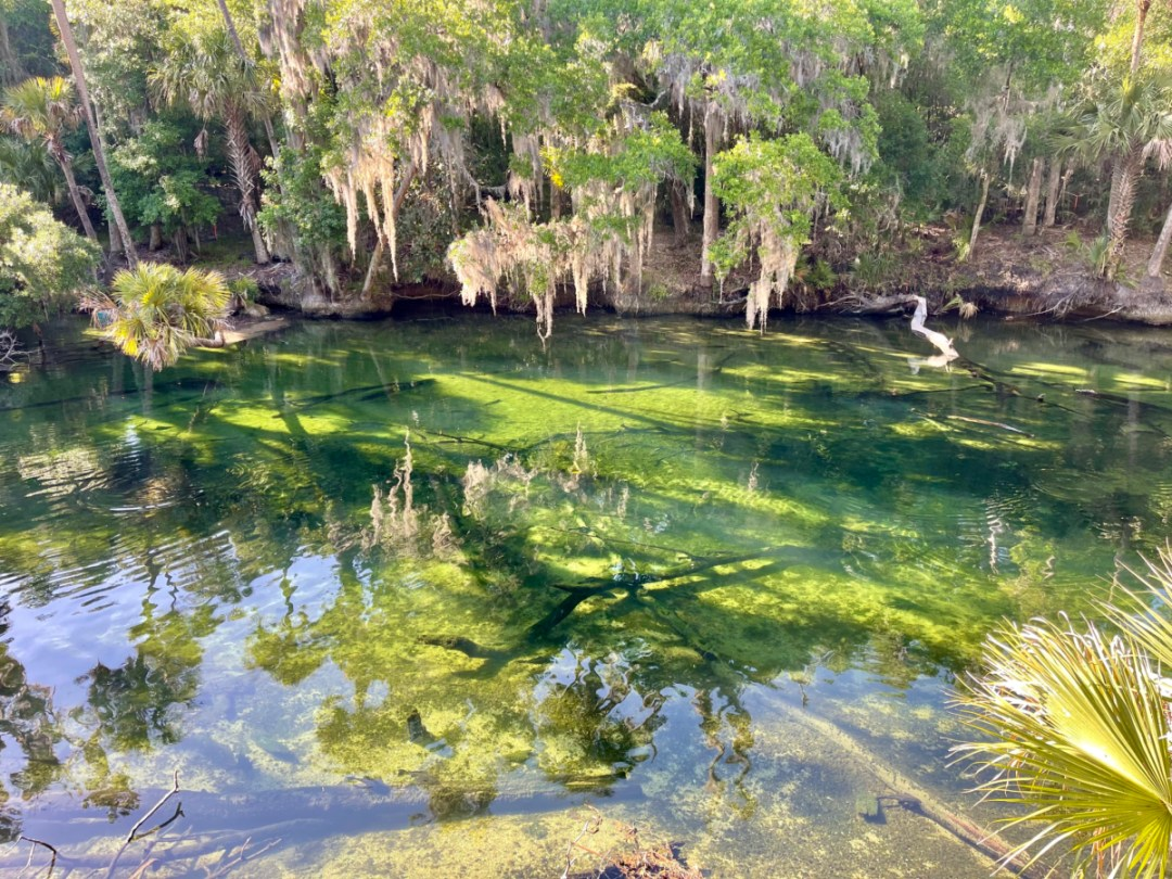 Blue Spring Run - Discover Florida's Blue Spring State Park & Campground