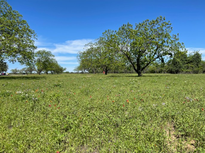 LBJ State Park wildflower meadow - Explore LBJ Ranch and the Texas Hill Country
