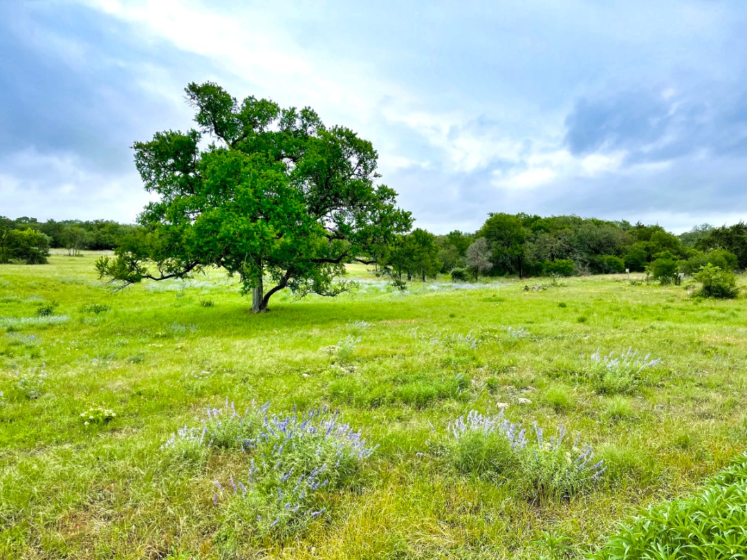 Lady Bird Johnson Wildflower Center landscape - Explore LBJ Ranch and the Texas Hill Country