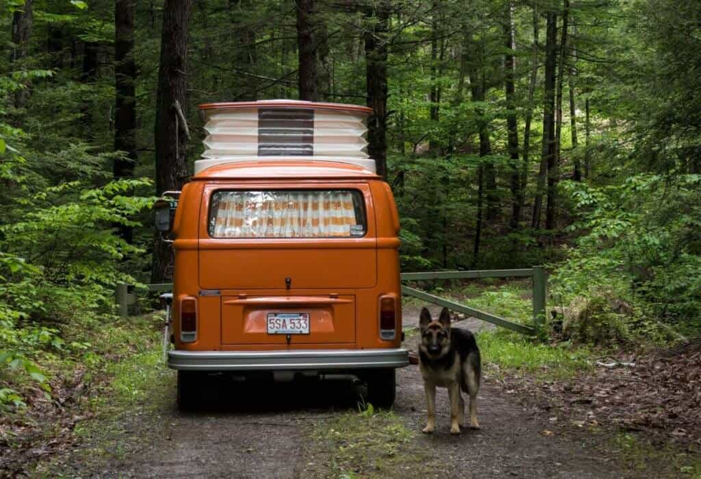 A German Shepherd stands next to an orange Volkswagen bus.