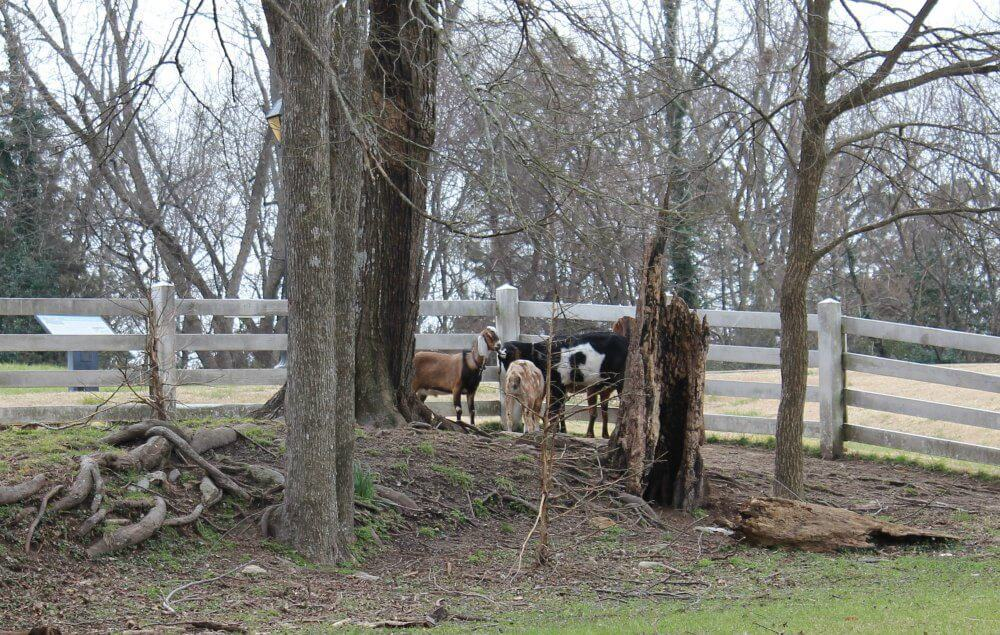Exploring Raleigh North Carolina Back Road Ramblers