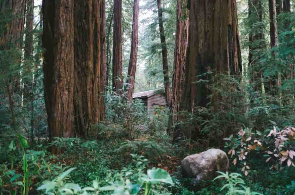 A cabin peaking out of the forest in Jedediah Smith Redwoods State Park.