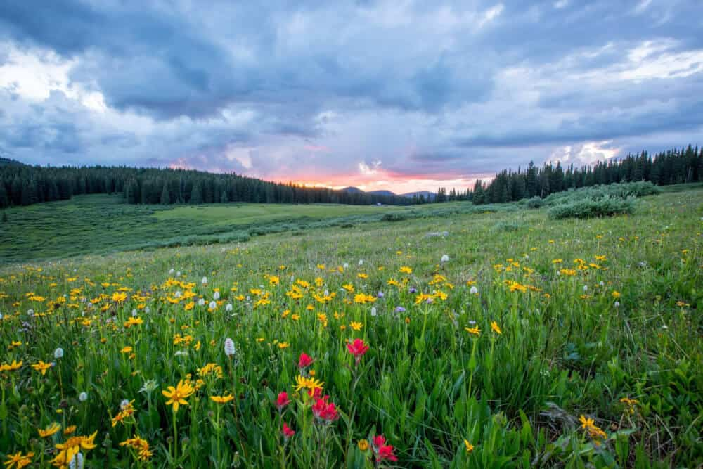 TOP 6 PERFECTLY AWESOME WILDFLOWER HIKES IN THE USA