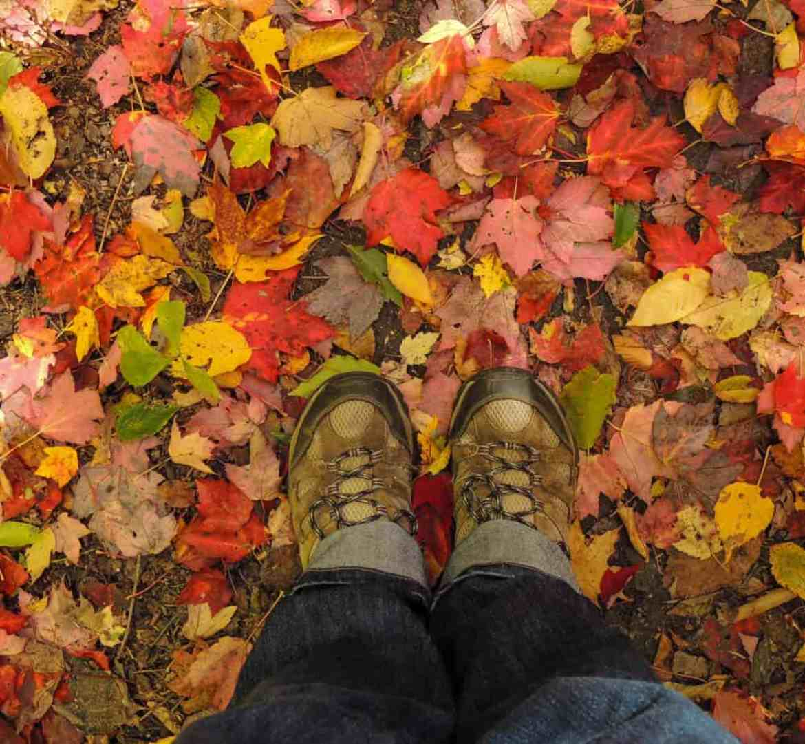 a pair of sneakers surrounded by colorful fall leaves on the March Cataract Falls Trail.