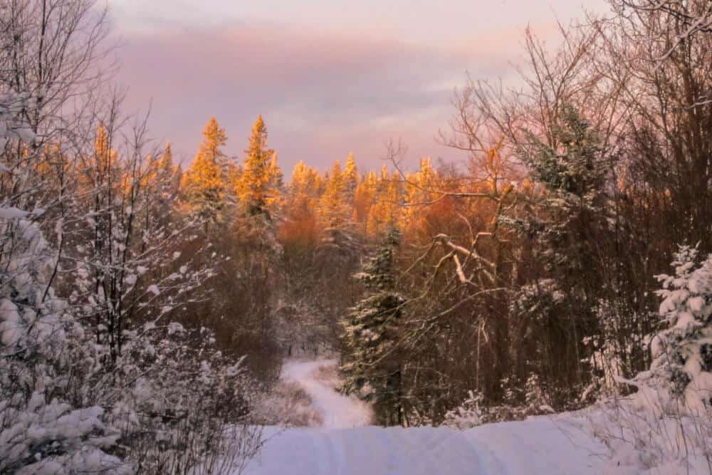 A snowy sunset in the Green Mountain National Forest