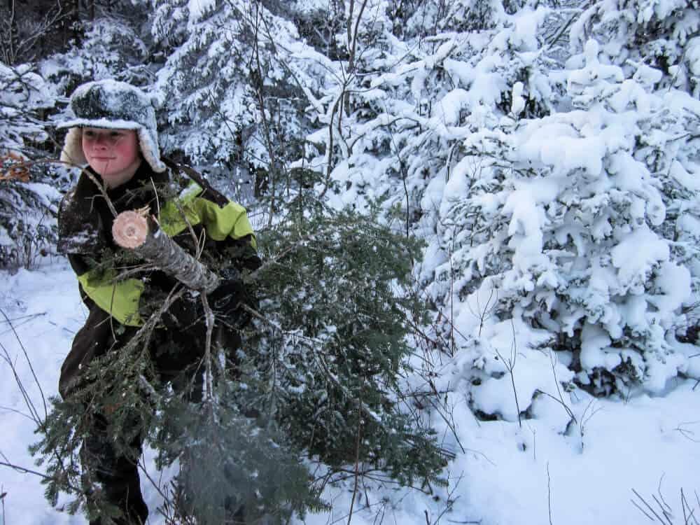 A boy dragging a Christmas tree through a snowy national forest