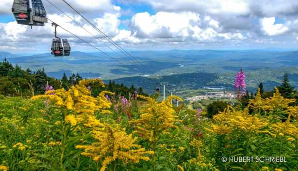The view from the top of Stratton Mountain, showing the gondola and wildflowers