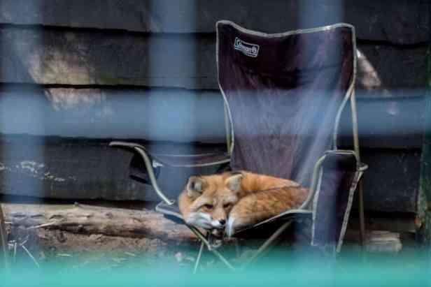 Adirondack Wildlife Refuge and Rehab