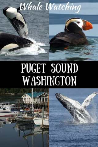 A collage of photos with the caption Puget Sound Whale Watching