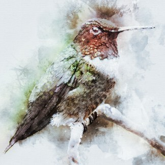 Hummingbird in Frost