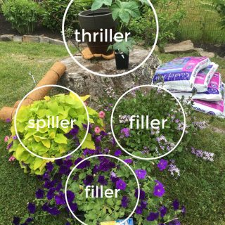 How to make a colorful container garden