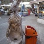 Kangaroo near Laleh Park