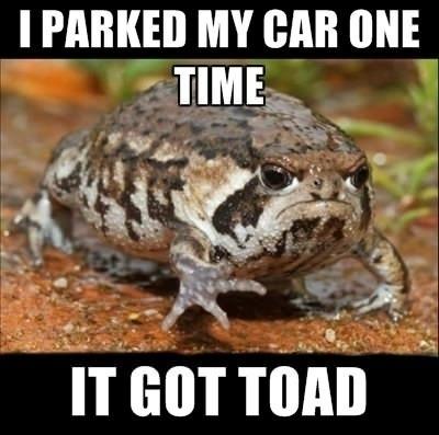 Rain frog care