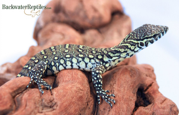 baby nile monitor care