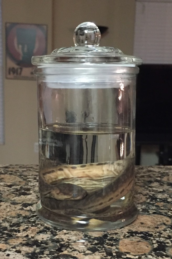 finished-wet-specimen