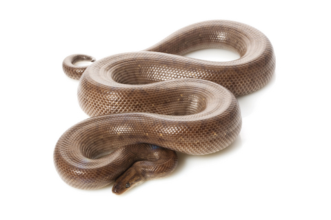 reptile frequently asked questions