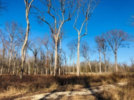 land for sale sharkey county ms