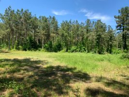 land for sale newton county ms