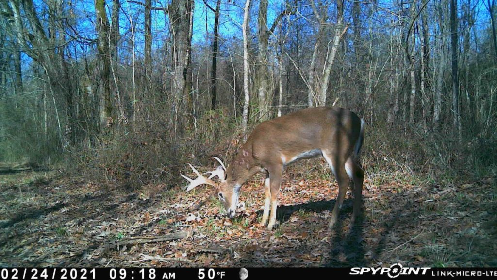 madison county ms hunting land for sale
