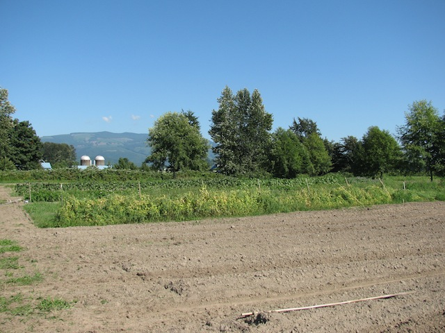 4 - organicfarming