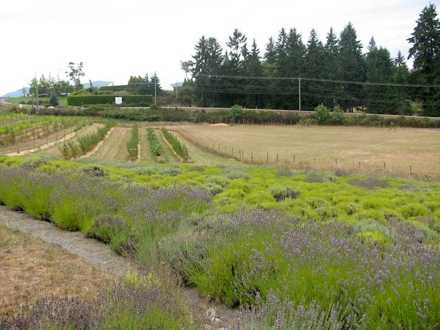 1 - fields