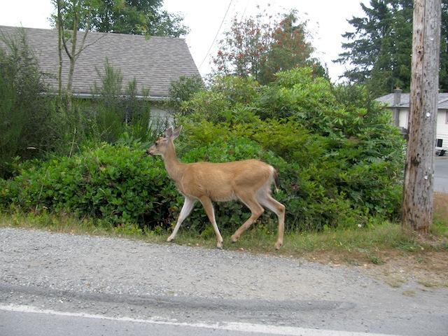 2 - deer