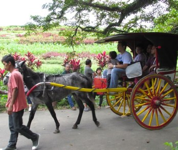 Didn't ride a carriage, but that's another activity available at Ecopark