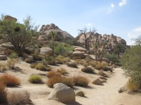 18 - joshua-tree-national-park