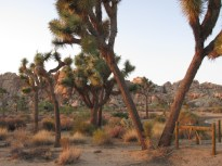 19 - joshua-tree-national-park
