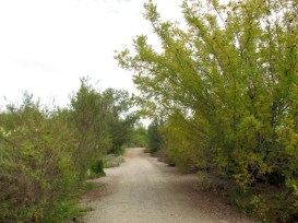 14 - inland_empire_utilities_agency_chino_creek_park