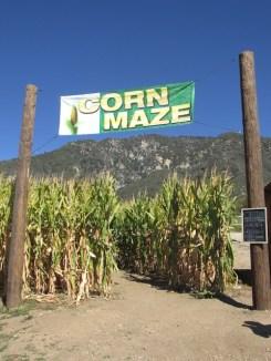 1 - oak_glen_california_corn_maze