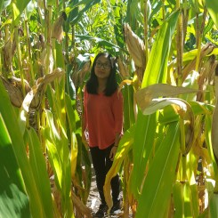 (Pretending to be) lost in the maze