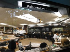 Watch paleontologists live in action inside the La Brea Tar Pits Museum.