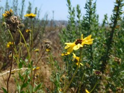 upper_newport_bay_nature_preserve_orange_county9