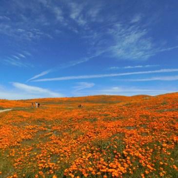 Antelope Valley Poppy Reserve, super bloom 2019