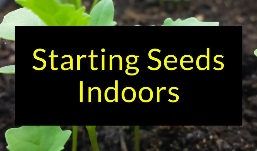 Starting Seeds indoors, seed starting, starting seeds, Backyard Eden, www.backyard-eden.com, www.backyard-eden.com/starting-seeds-indoors