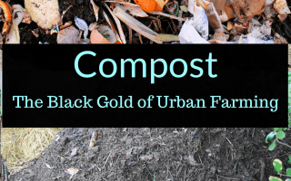 Compost: The Black Gold of Urban Farming, Compost, Backyard Eden, www.backyard-eden.com