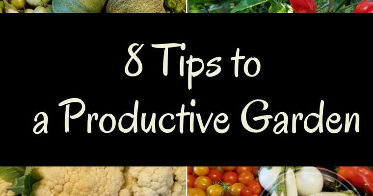 The 8 Tips to a Productive Garden