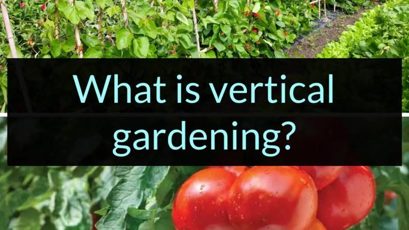 What is vertical gardening, vertical gardening, Backyard Eden, www.backyard-eden.com