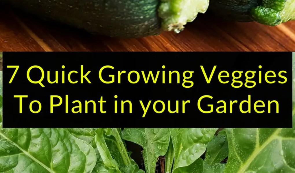7 Quick Growing Veggies To Plant in your Garden, Quick Growing Veggies, Backyard Eden, www.backyard-eden.com, www.backyard-eden.com/7-quick-growing-veggies-to-plant-in-your-garden
