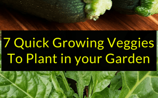 7 Quick Growing Veggies To Plant in your Garden, Quick Growing Veggies, Backyard Eden, www.backyard-eden.com, www.backyard-eden.com/7-quick-growing-veggies-to-plant-in-your-garden